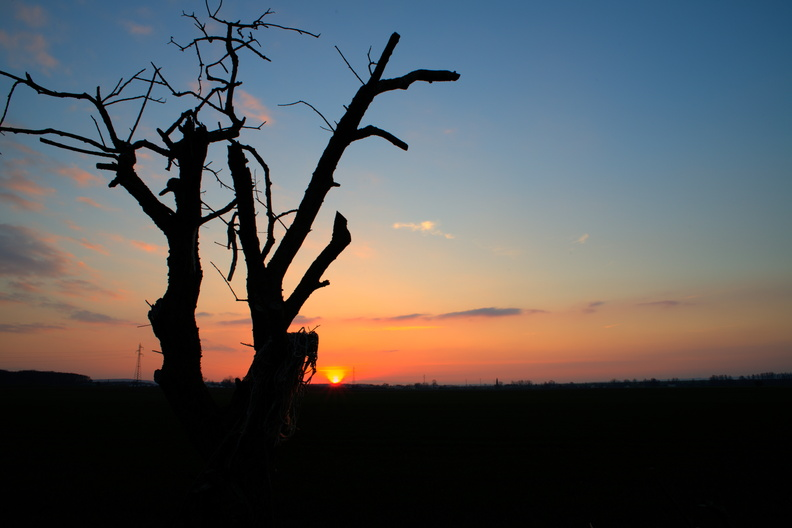 Lonely tree at sunset.jpg